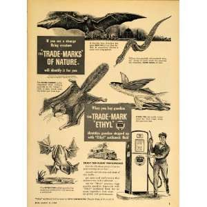 1949 Ad Ethyl Gas Bat Flying Snake Squirrel Fish Frog