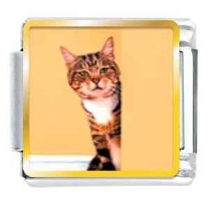 Peek A Boo Cat Animal Photo Italian Charms Bracelet Link