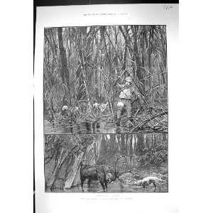 1889 Elk Sambhur Deer Hunting Ceylon Sport Man Cutting
