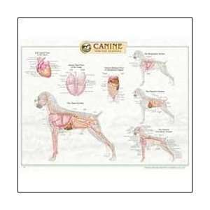 Canine Internal Anatomy Chart Plastic: Health & Personal
