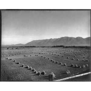 Harvest time,Flathead Valley,Northwestern Montana,MT,c1907
