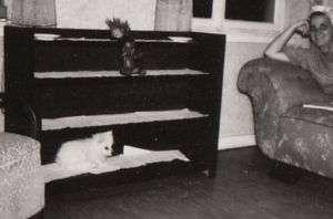 OLD Photo spitz Pomeranian dog black baby doll & lady