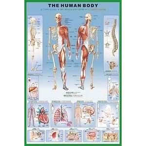 how to create a human body screen