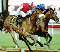FRED STONE horse plate KELSO Signature Ed MIB RARE